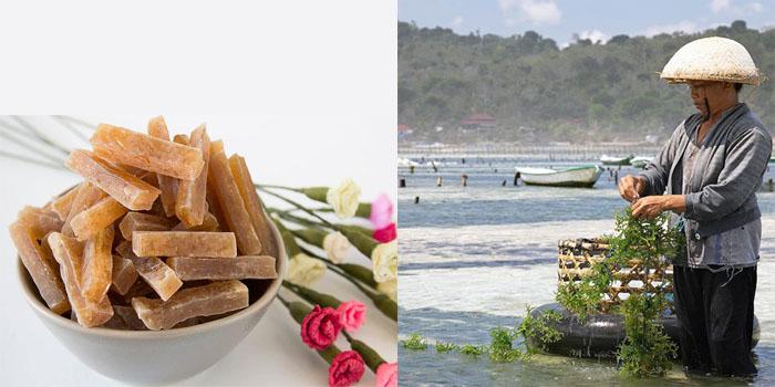 Rong sụn Ninh Thuận có gì đặc biệt?