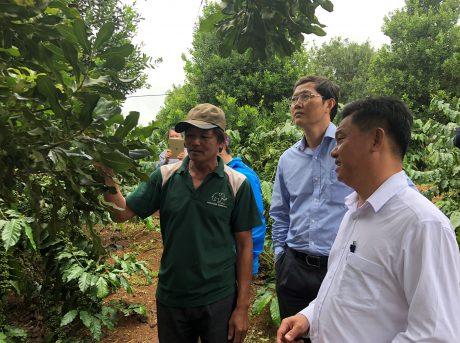 Mắc ca Việt Nam - tiềm năng phát triển ở Tây Nguyên và Tây Bắc